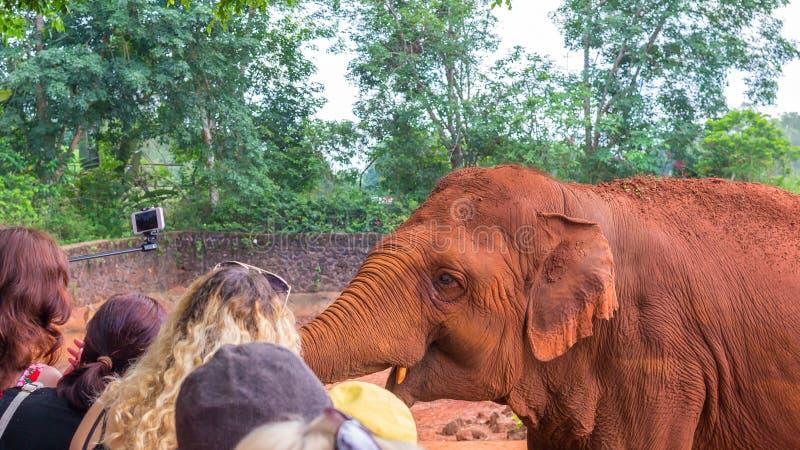 一头友好的赤褐色大象在徒步旅行队公园中国与访客沟通 r 库存图片