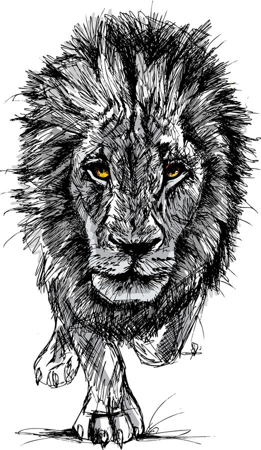一头大公非洲狮子的草图 皇族释放例证
