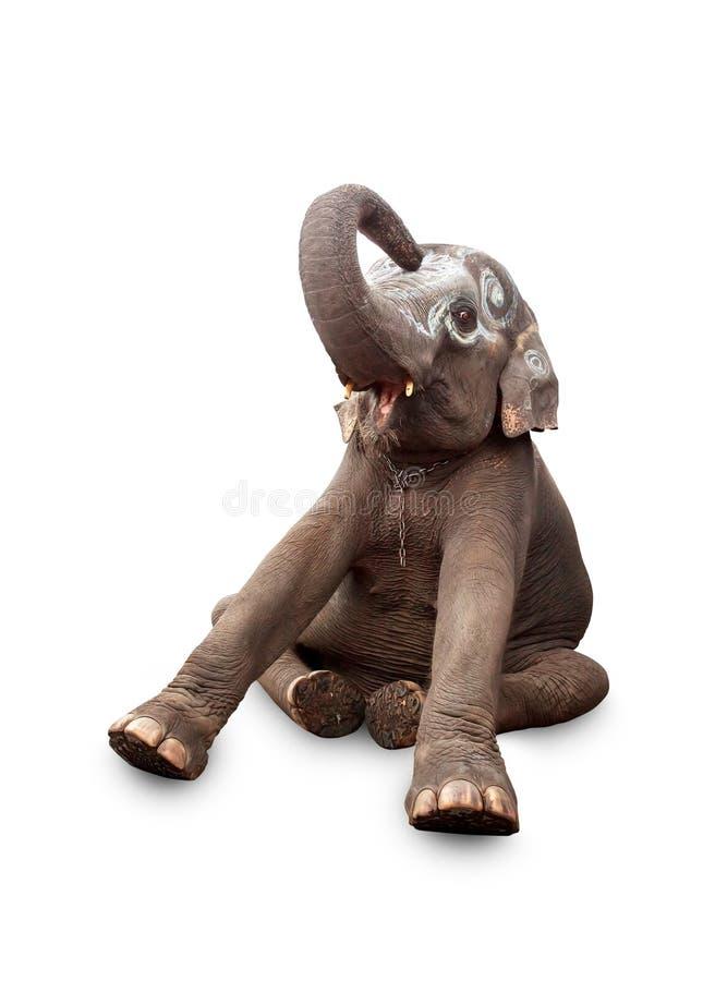 一头大象的纵向在空白背景的 库存照片