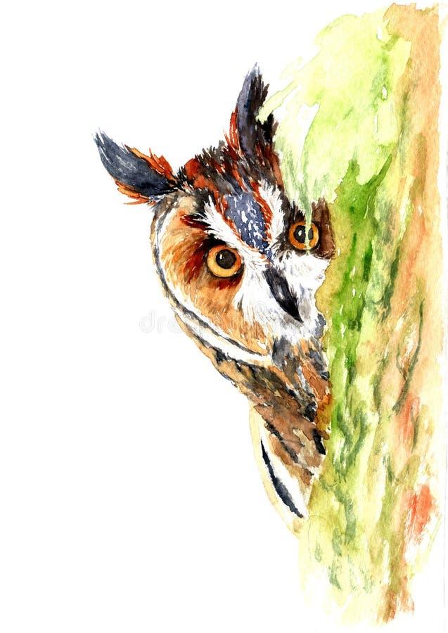 一头好奇猫头鹰的水彩图画在树的 向量例证