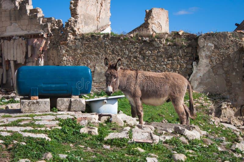 一头幼小驴在仓库广场一个饮水池  库存图片
