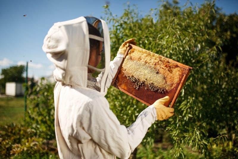 一套专业蜂农服装的一位年轻女性蜂农,检查与拿着它在她的手上的蜂窝的一个木制框架 图库摄影