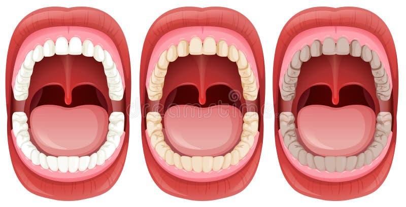 一套人的嘴解剖学 皇族释放例证