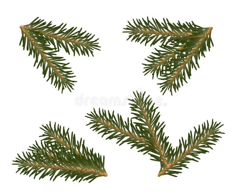 一套圣诞树分支 免版税图库摄影