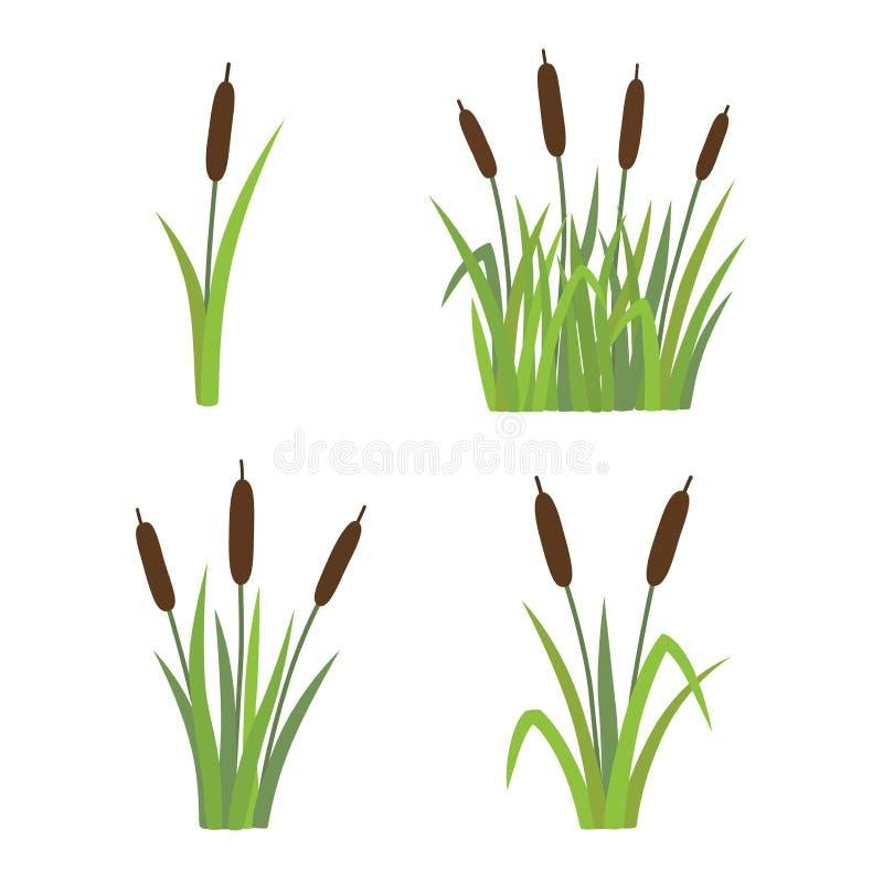 一套在白色背景隔绝的草的芦苇 库存例证