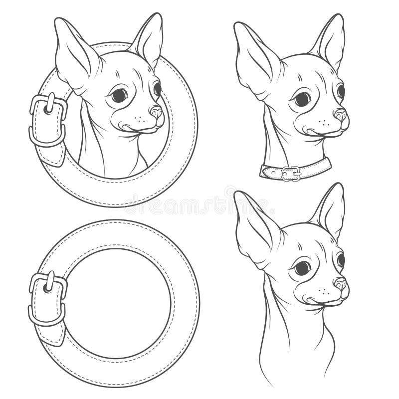 一套奇瓦瓦狗的传染媒介图画在衣领的 在一个空白背景的对象 向量例证