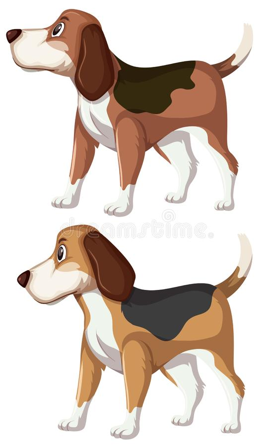 一套小猎犬狗 库存例证