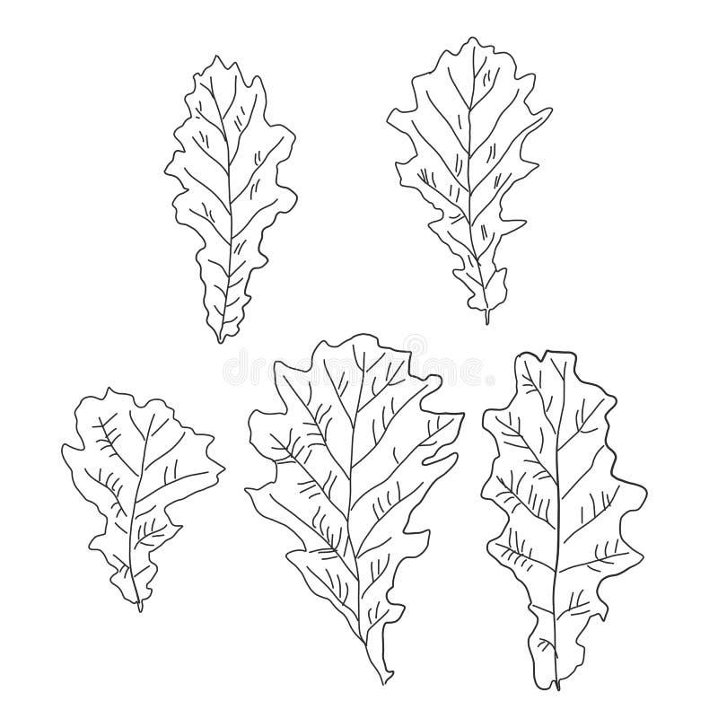 一套橡木叶子 向量例证