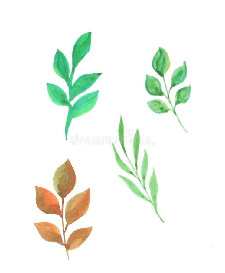 一套的水彩例证有叶子的枝杈 向量例证