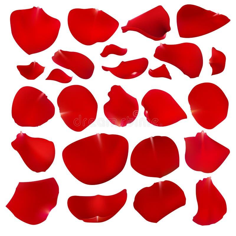 一套绯红色玫瑰花瓣 皇族释放例证
