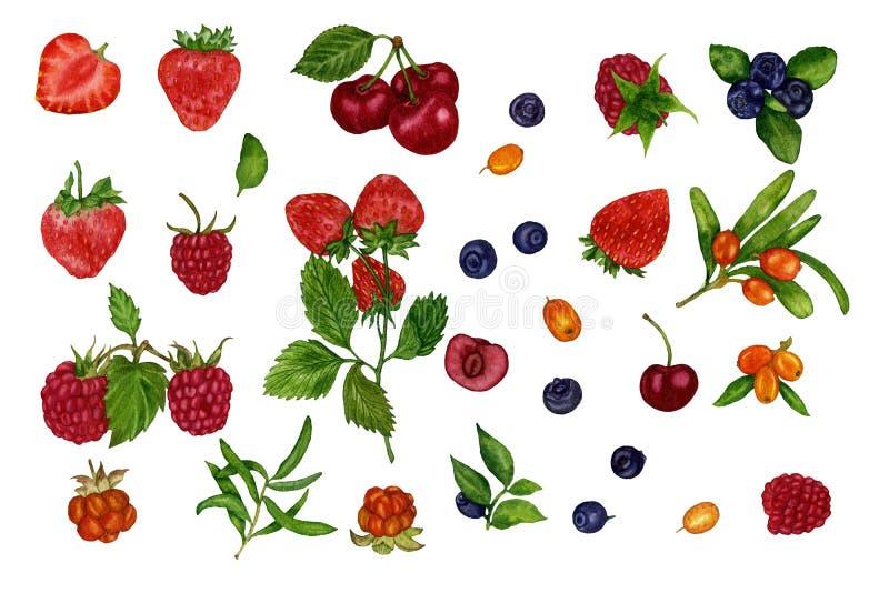 一套莓果的各自的元素 水彩 象查找的画笔活性炭被画的现有量例证以图例解释者做柔和的淡色彩对传统 背景设计要素例证向量白色 向量例证
