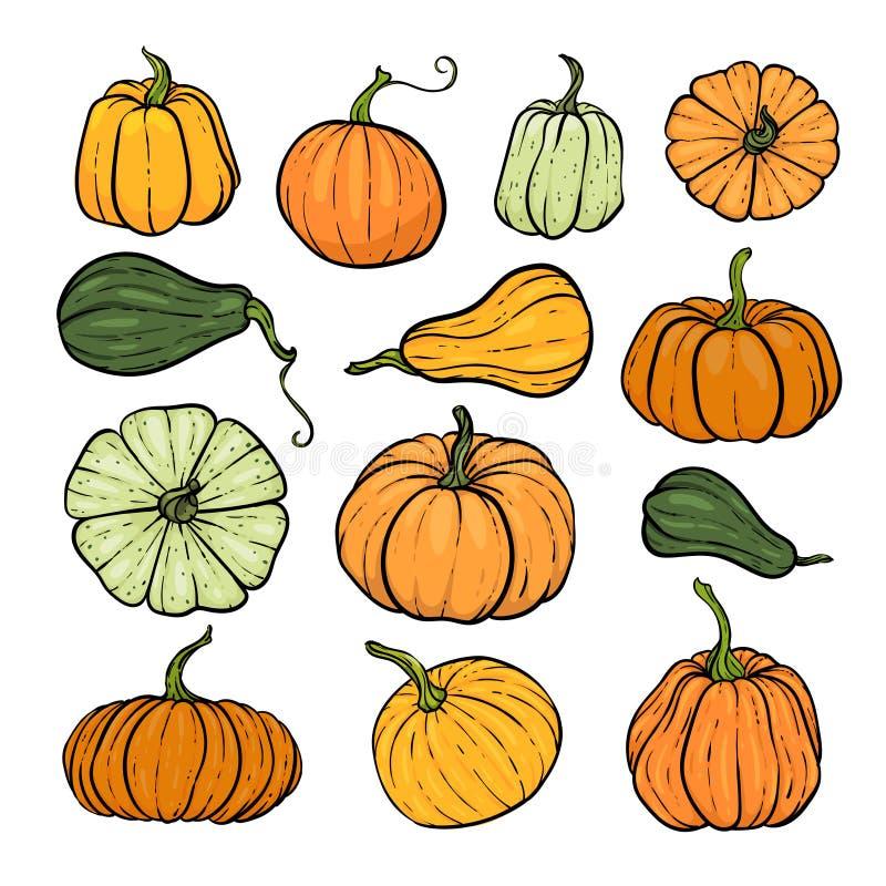 一套装饰橙绿南瓜 手绘草图矢量图秋图 感恩节,万圣节 向量例证