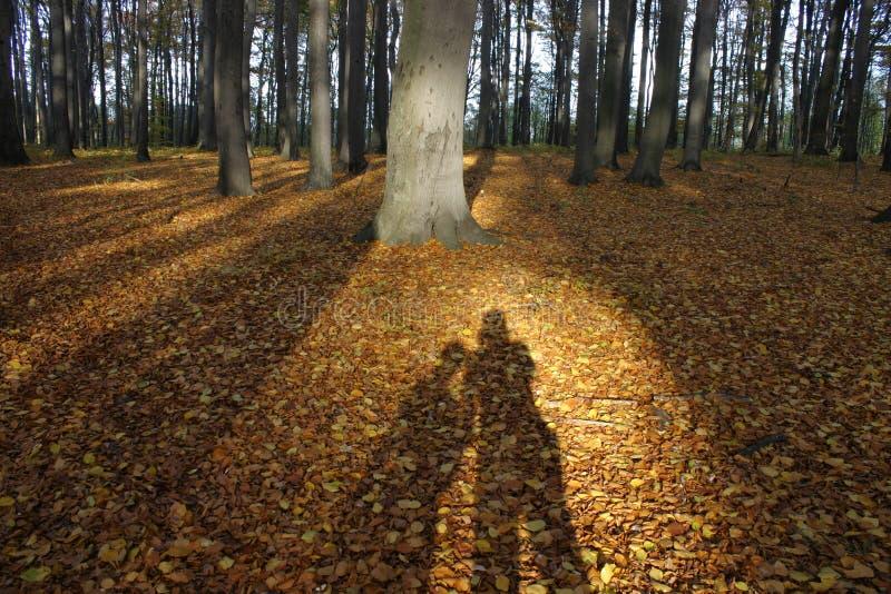 一对夫妇的阴影在森林01里 图库摄影