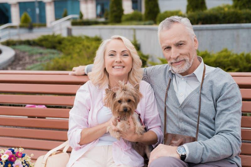 一对年长夫妇休息坐在正方形的一条长凳 妇女有相当小犬座坐她的手 免版税库存照片
