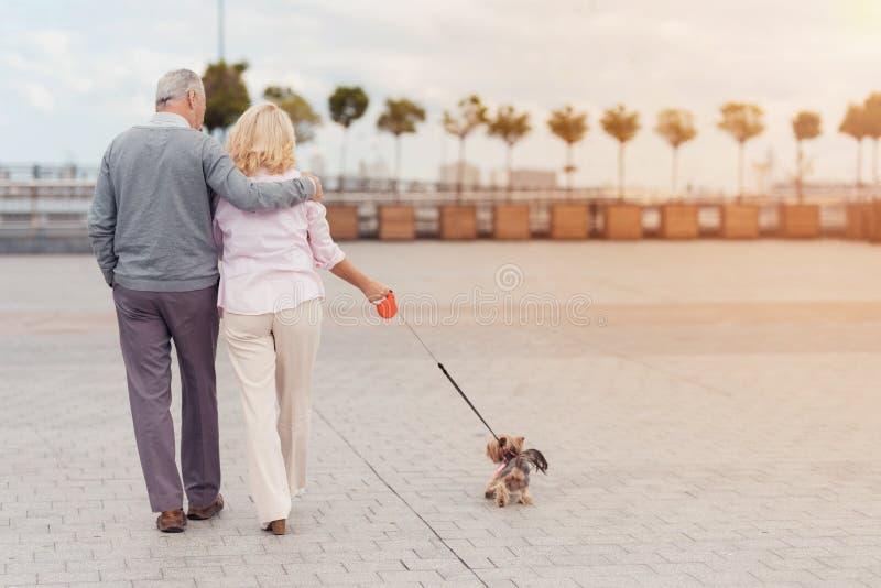 一对年长夫妇在与她的小犬座的正方形走 他们走,并且狗在他们旁边走在皮带 免版税图库摄影