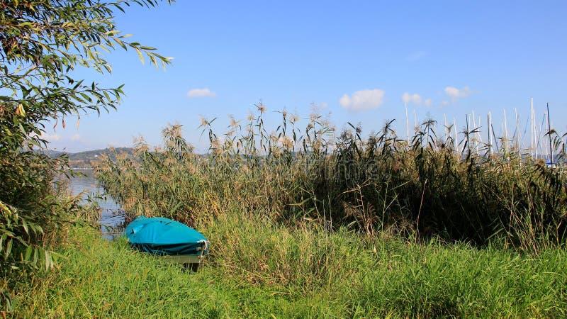 一小船和丛芦苇在Bodensee湖 库存照片