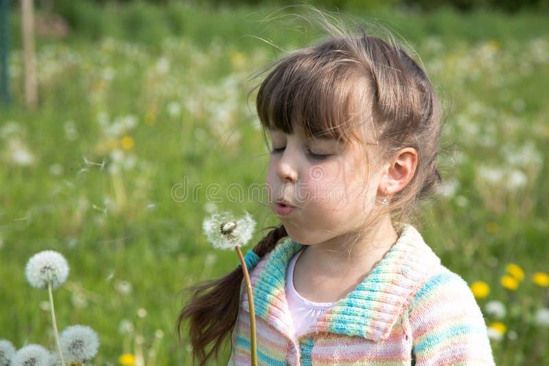 一少女在吹在白色蒲公英花束的春天草甸的清早  免版税库存照片