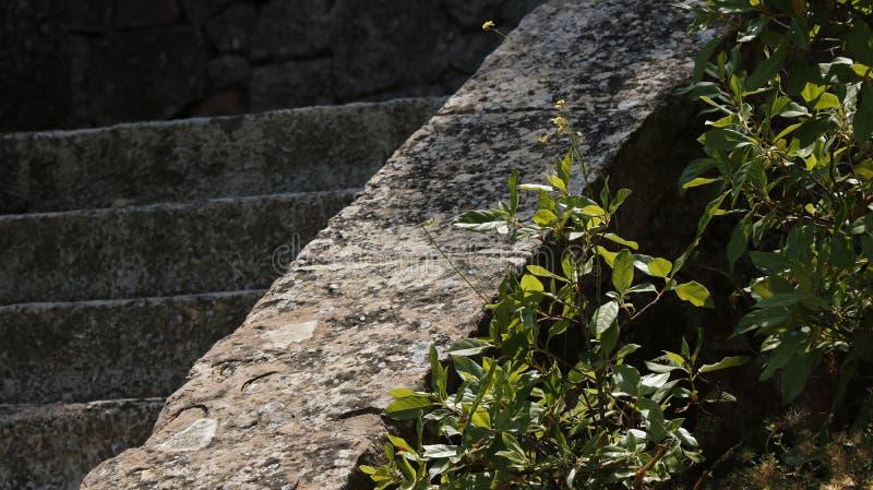 一层石楼梯的特写镜头 免版税库存图片
