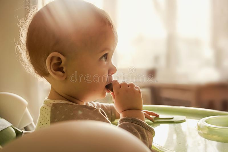 一岁的孩子吃薄脆饼干,嚼第一颗牙,横幅的背景关于婴儿食品 库存图片
