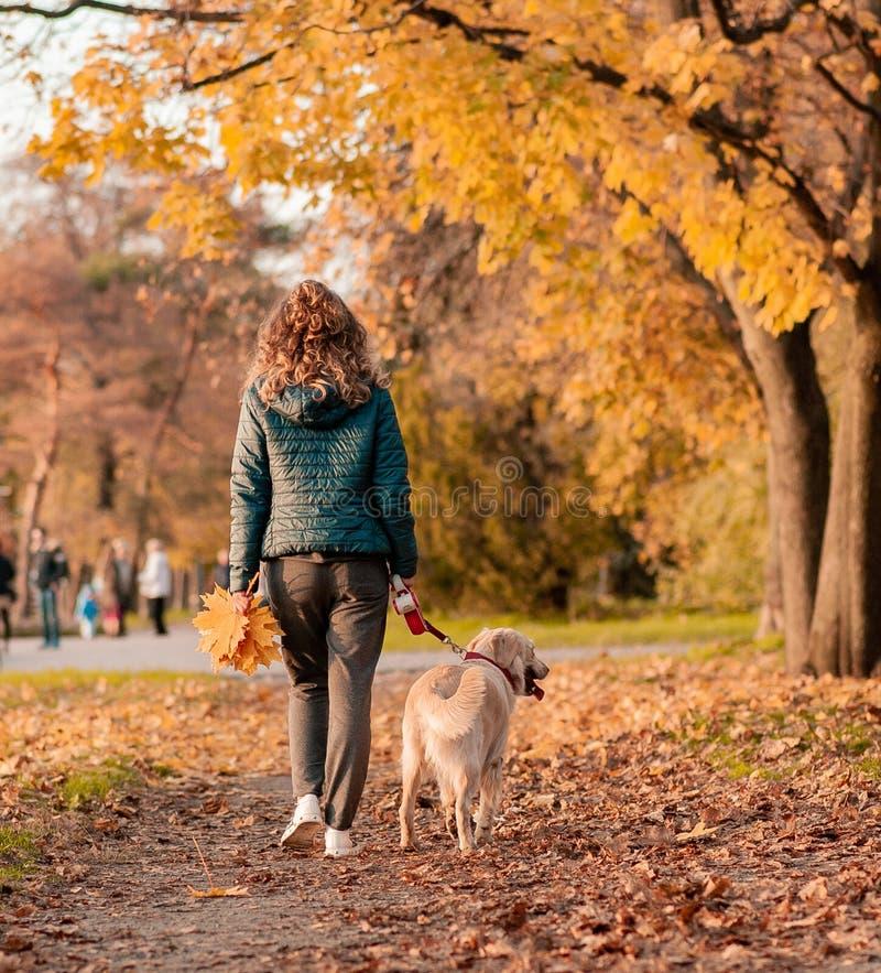 一年轻女人的画象有狗的在金黄秋天步行 库存图片