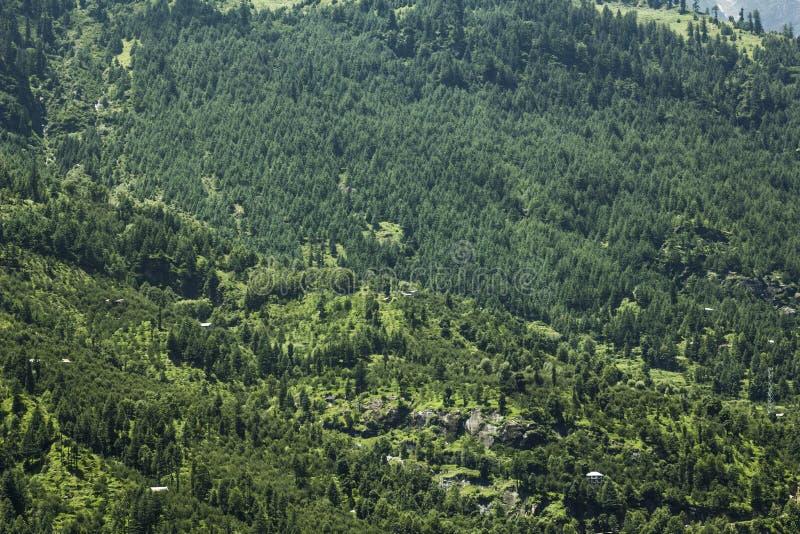 一座山的森林与石头 免版税库存照片