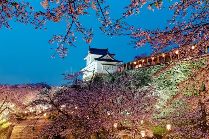 一座庄严日本城堡的美好的春天风景在浪漫佐仓樱花围拢的小山顶部的 库存照片