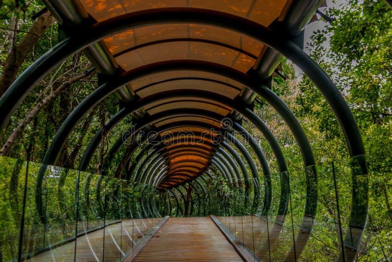 一座暂停的玻璃、木头和金属桥梁在森林里 免版税库存照片
