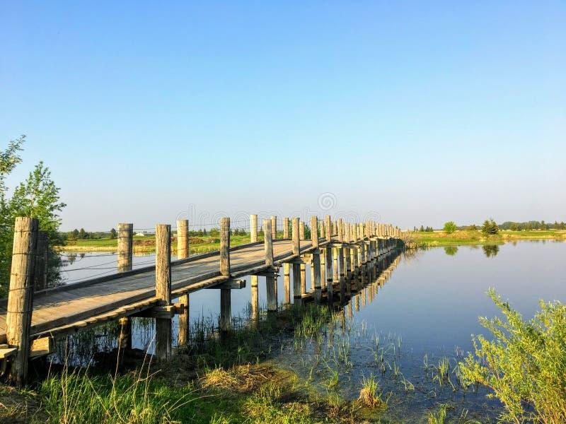 一座老小长的木脚桥梁在一个美好的夏天晚上横渡一个美丽的湿软的池塘在埃德蒙顿,阿尔伯塔 免版税库存照片