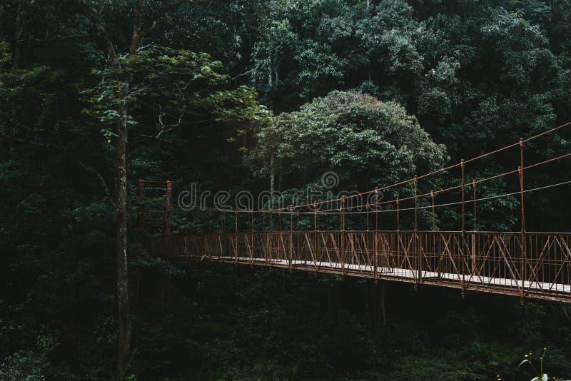 一座长的机盖走道桥梁在森林里 图库摄影