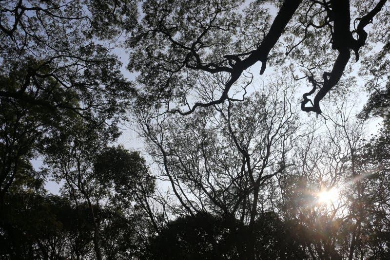 从一张底视图的树与太阳发出光线击穿 免版税库存图片