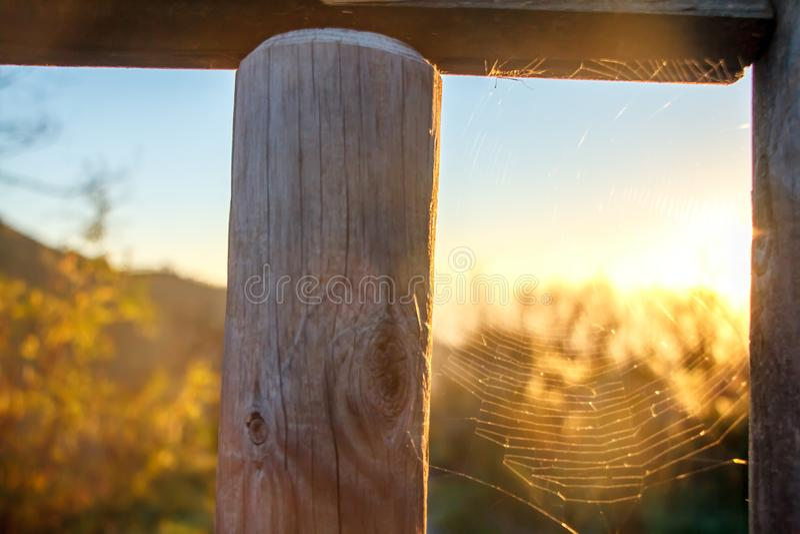 一张蜘蛛网的特写镜头与露滴的在日出在太阳的第一光芒 免版税图库摄影