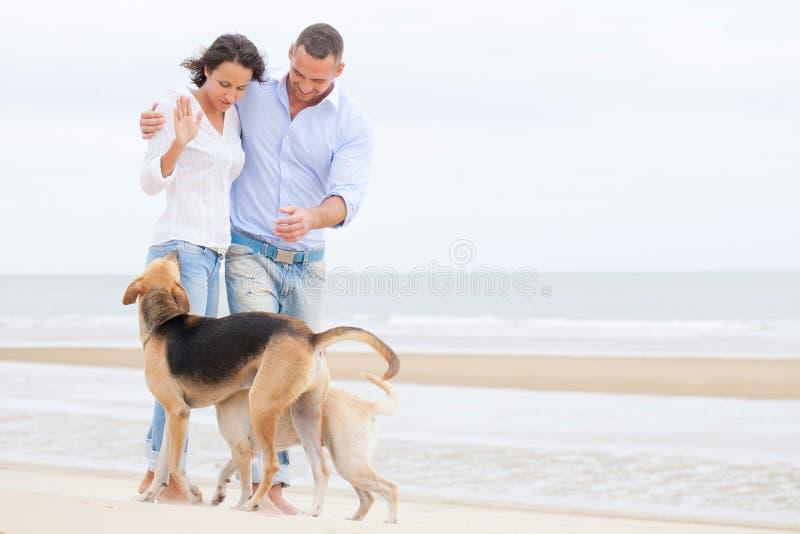 一愉快的加上的纵向狗 免版税库存照片