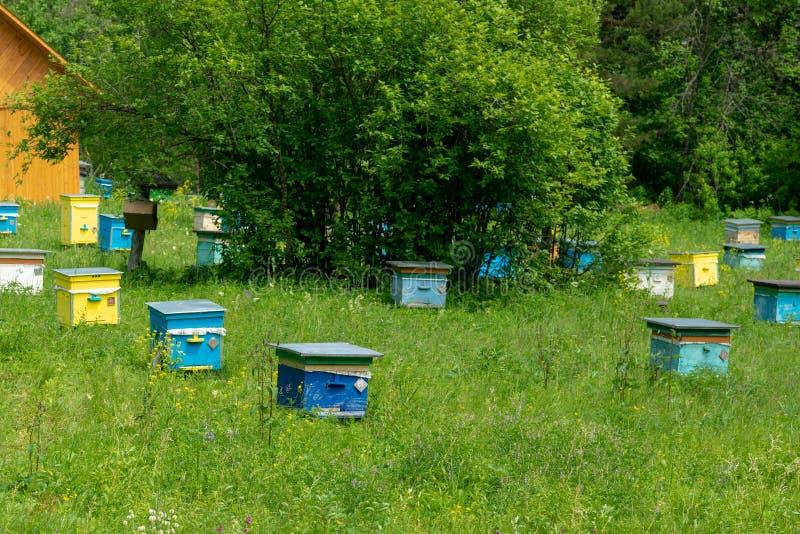 一排蜂巢在花园里,果园在后面 舒尔干-塔什自然保护区 库存照片
