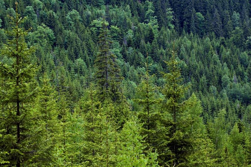 一揽子森林 免版税图库摄影