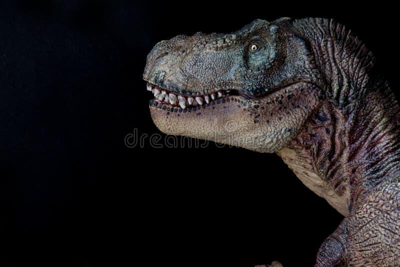 一暴龙rex的画象在黑背景的 免版税库存照片