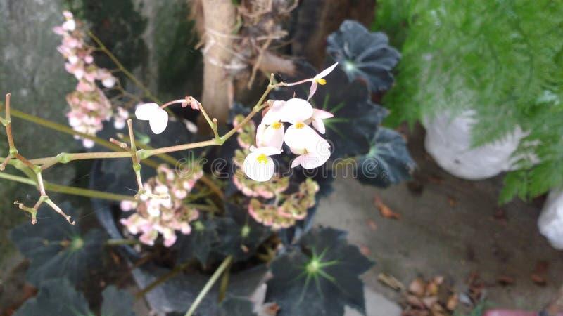 一朵小的花 图库摄影