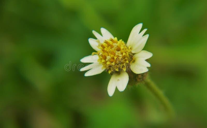 一朵小花的宏指令 库存图片