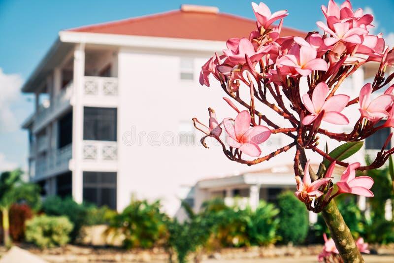 一朵桃红色花的特写镜头 库存图片