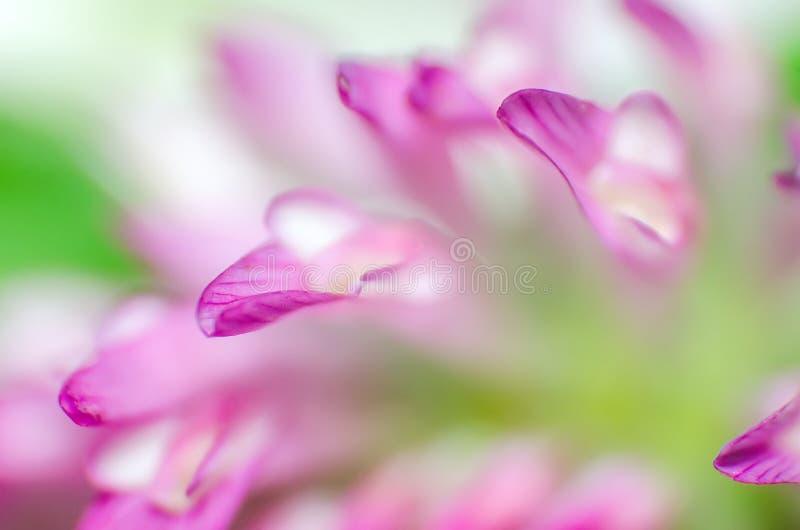 一朵桃红色花的瓣的宏指令 免版税图库摄影