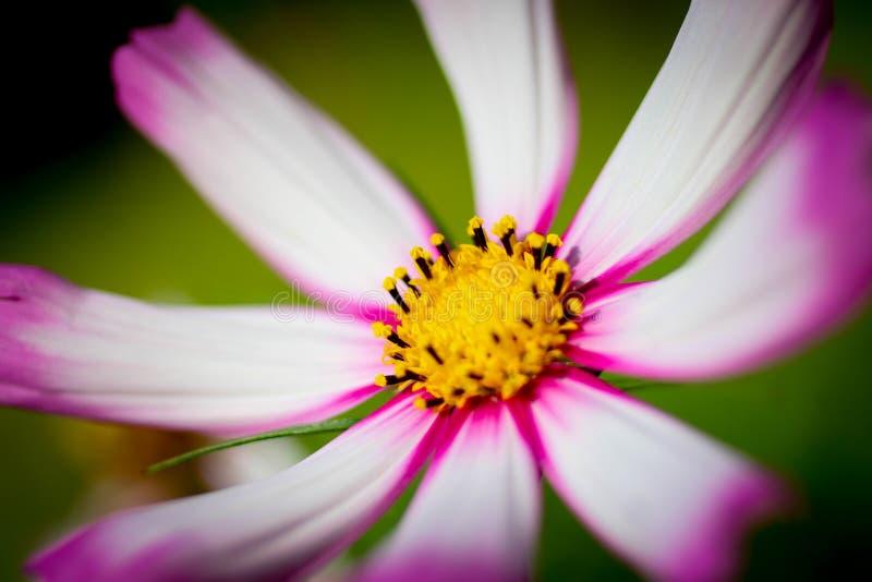 一朵紫色花的特写镜头在被弄脏的绿色背景的 库存照片