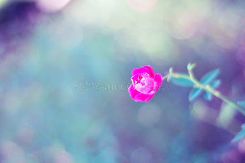 一朵红色开花的花是非常美丽的 免版税库存图片