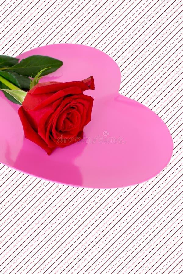 一朵红色玫瑰被安置在明亮的桃红色心脏顶部镶边了背景 库存图片