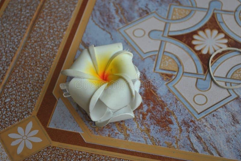 一朵美丽的花在庭院里 库存图片