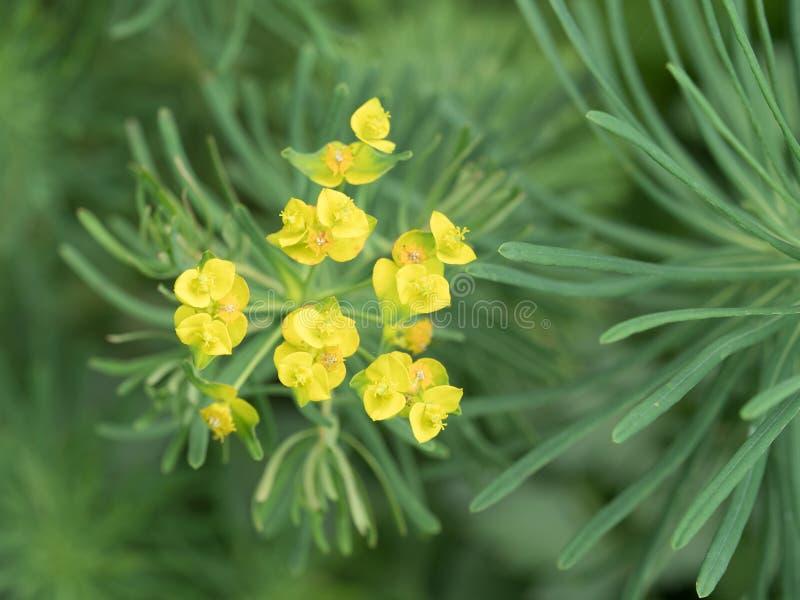 一朵美丽的黄色野花的特写镜头 图库摄影
