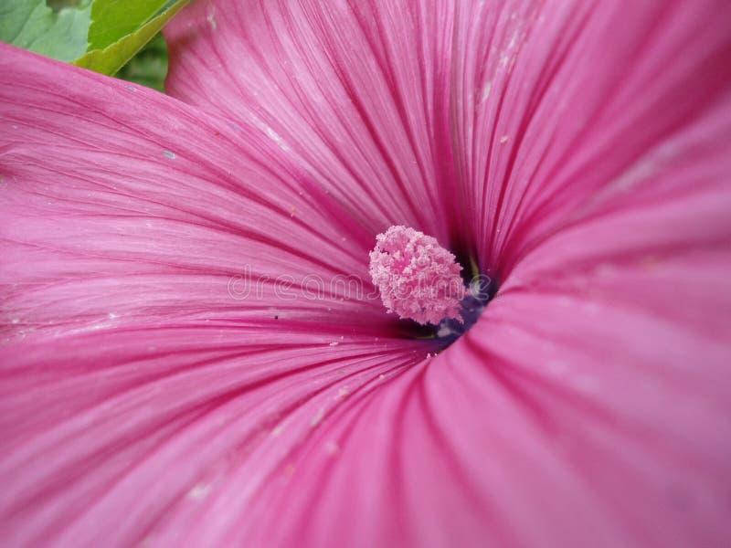 一朵美丽的紫色花的宏指令 库存图片