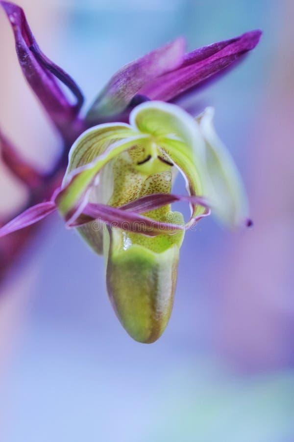 一朵花的魅力在春天 库存照片