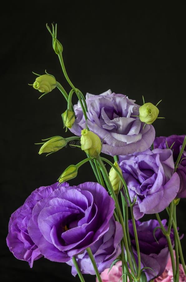 一朵蓝色玫瑰的花在黑背景的 免版税库存照片