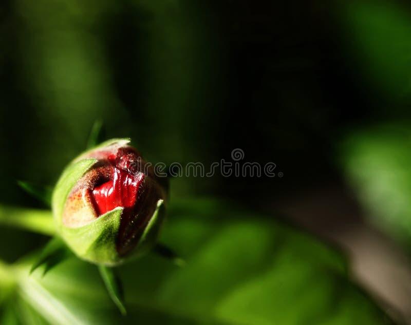 一朵邪恶的花 免版税库存照片