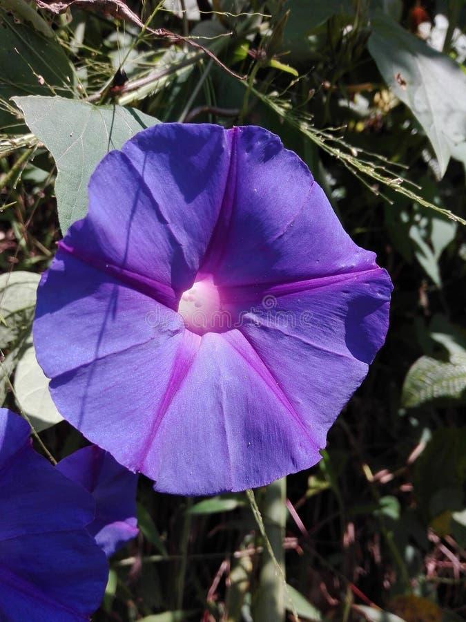 一朵非常美丽的花不整洁的花 免版税图库摄影