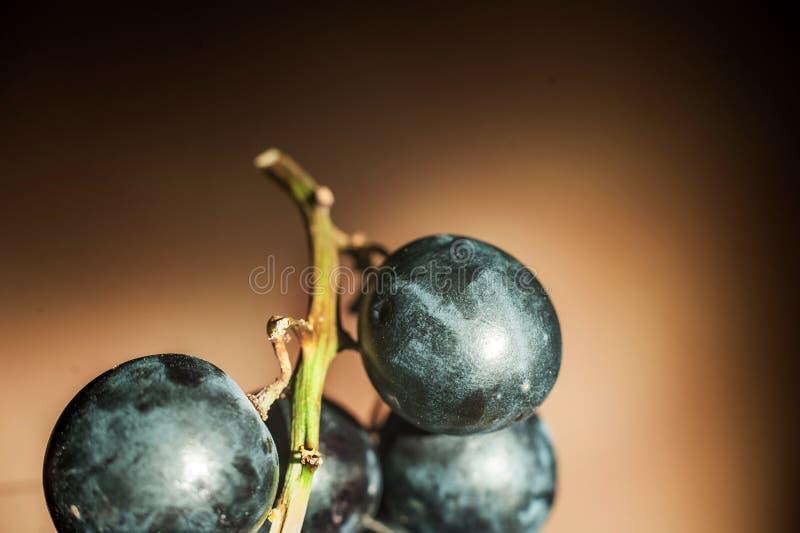 一束在黑暗的背景的深蓝葡萄在人为坚硬照明设备关闭的条件  葡萄,切成了两半, grap 免版税库存图片